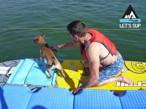 Let's SUP - dog friendly - cão no meimao